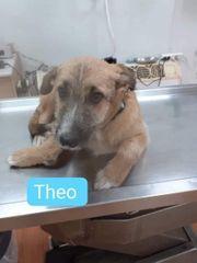Theo sucht sein Zuhause