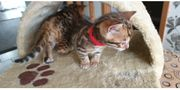 Niedliche Kitten auf der Suche