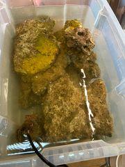 20-25kg LG für Meerwasser
