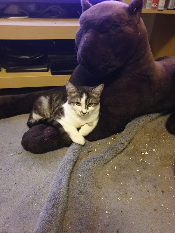 Kitten der edelsten Art - Papa