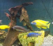 Aquarium 375 Liter inkl Unterschrank