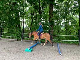 Traumpony sucht Reitbeteiligung Pflegebeteiligung: Kleinanzeigen aus Dornbirn - Rubrik Reitbeteiligungen