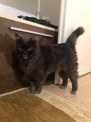 Katze Mia sucht tolles Zuhause