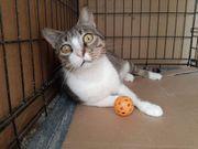 Maggie verschmuste Katzendame mit Handicap
