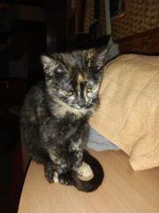Kätzchen Lori sucht Dich zum