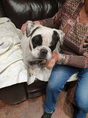 Leyla aktives Hundemädel wünscht sich