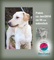 Pablo -auch wenn ich nicht