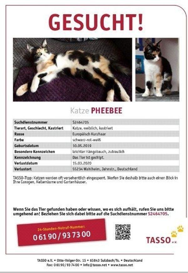 Katze Pheebee vermisst