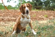 Borco 7 Jahre - Mischling - Tierhilfe