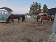 Zwei Pferdeboxen zu vermieten