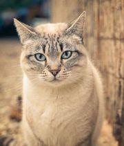 Katze Cora sucht ihr Zuhause