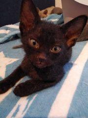 Baby Sphinx Velour-Brush suchen neues