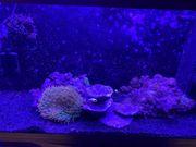 Meerwasser Aquarium 125 Liter