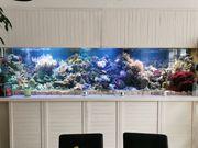 XXXL Meerwasser Aquarium komplett Inhalt