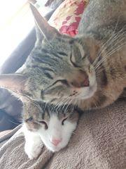 Katze und Kater