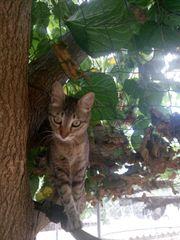 Katze Mili sucht ein liebevolles