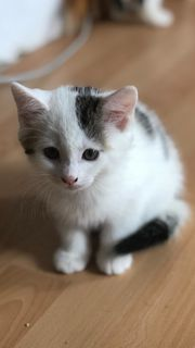 Süsse Babykatze