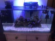 Aquarium Meerwasser 120 Liter