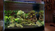 Nano Aquarium 55L mit Inhalt