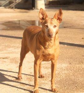 Hunde - Ein Wunder für Colajet