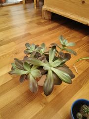 Verschiedene Zimmerpflanzen Wasserlilie Kakteen Geldbaum