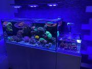 Meerwasseraquarium Aqua Medic Xenia 130