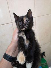 Baileys Katze aus dem Tierschutz