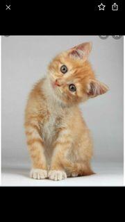 Suche ein Kitten