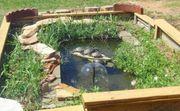 Suche Schmuckschildkröten