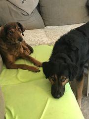 Hundebub 1 Jahr sucht neues