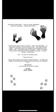 Vier Füße und acht Pfoten