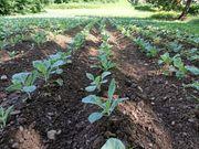 Landwirtschaftliche Fläche