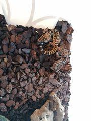 Coleonyx elegans Mexikanischer Krallengecko