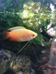 Aquarium Auflösung Fische Garnelen Schnecken