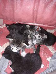 süsse Katzenbabys zu verschenken