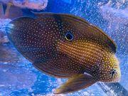 Korallenableger Fische Garnelen LPS SPS