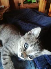 5 Junge Kätzchen suchen ein
