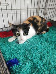 Annabella Katze aus dem Tierschutz