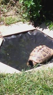 2 Schildkröten abzugeben