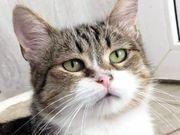 Jessica - ruhige und verschmuste Katzendame