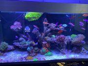 Verschiedene Korallen Fische