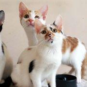 Entzückende Katzenkinder suchen zusammen ihre