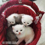katzen zu verkaufen