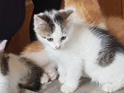 Junge Katzen zu Verschenken