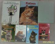 7 Katzenbücher JETZT je Buch