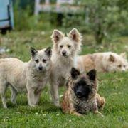 Viele verschiedene Hunde suchen ein