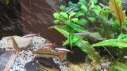 Aguarium komplet fisch flanzen
