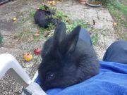 Süße junge Kaninchen