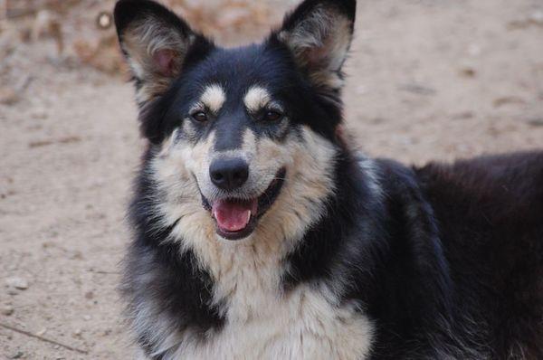 Darcy freudiges Hundemädchen ca 2