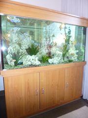 Aquarium mit Fischen Steinen Pflanzen